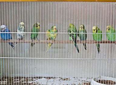 Ptaki_egzotyczne-3474