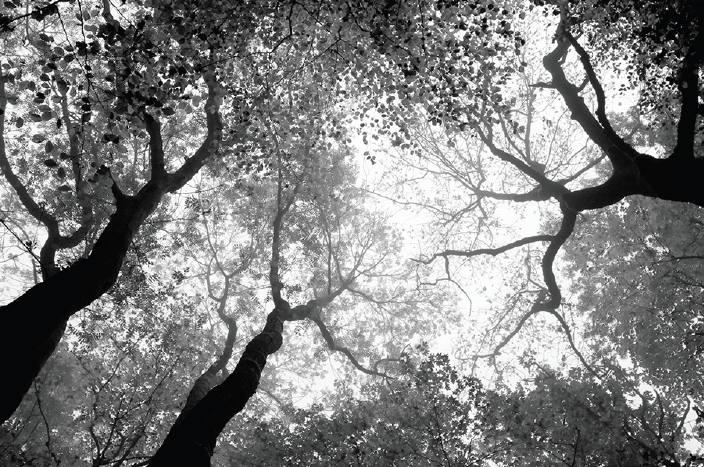 drzewa_df