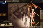 Body Worlds & The Cycle of Life