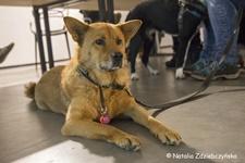 Łódzki dzień dla bezdomnych psów