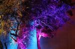 Światło, którym oddychasz - Sienkiewicza/Traugutta